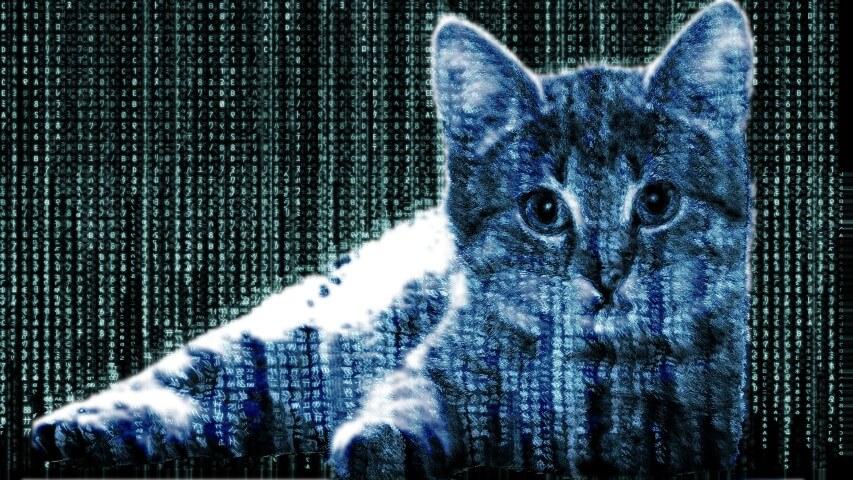 Steganography Cat